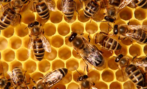национална пчеларска програма