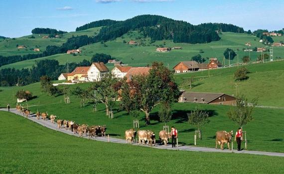 селски райони