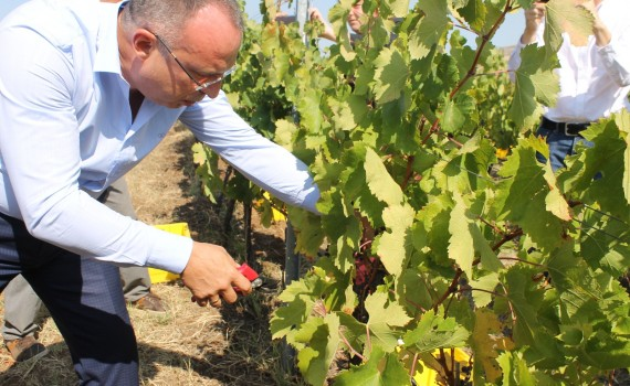 Откриване на гроздобера