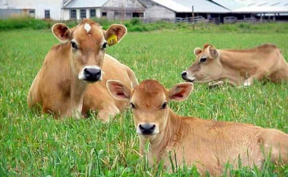 биологично животновъдство