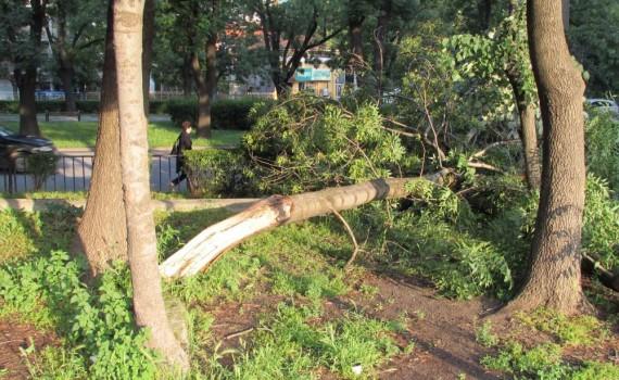 паднали дървета