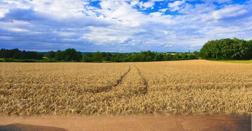 селскостопанска продукция