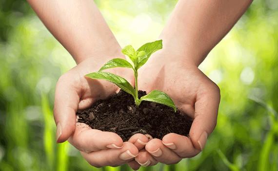 агроекология