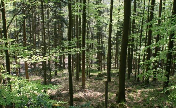 gora_горa_forest0411-1024x683