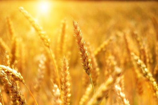 жито-пикс